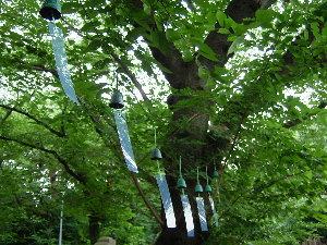 木にロープを渡し、そこにつるした風鈴