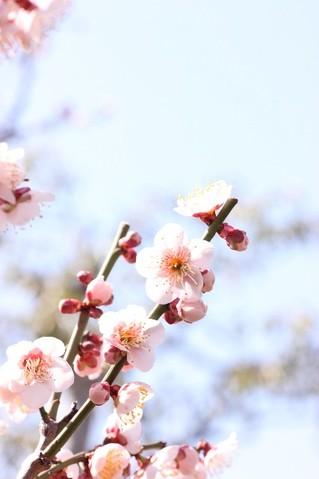 new_spring.jpg