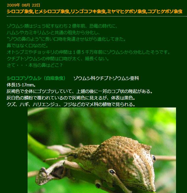 https://blogs.itmedia.co.jp/narisako/google5.jpg